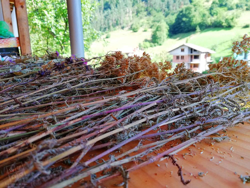 Изсушени билки-къща за гости Млечен дом, село Смилян